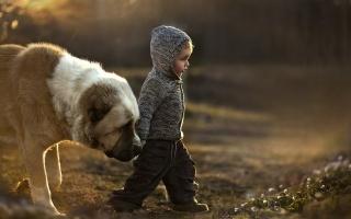 chlapec, pes, náladu