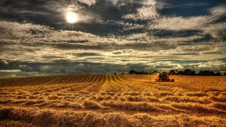 the sun, clouds, windy day, field, harvester, harvesting