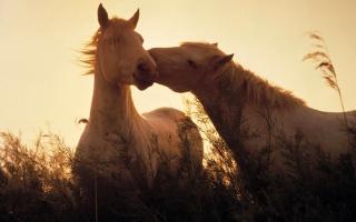лошади, кони, свет, трава, животные, лошадей, свет, трава