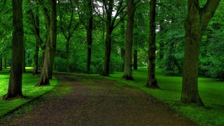 Park, track, trees, grass, calm beauty