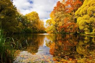 природа, парк, осінь, ставок, дерева, небо, красиво