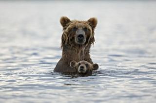 медведица с медвежонком, купание