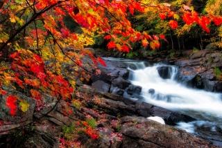 осінь, ліс, струмок, гілка, краса