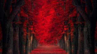 дерева, Алея, червоні листя, осінь
