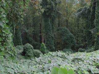 ліс, дерева, зарості, краса
