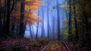 листопад, дорога, осінь
