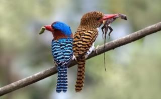 птахи, хижаки, макро, фото, природа