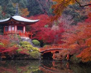 podzim v japonsku, park, rybník, budova, most, multi-barevné listí