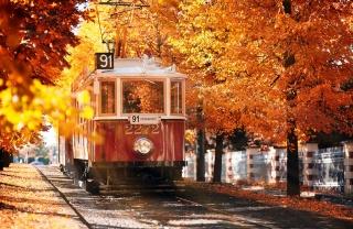 pražská podzim, staré tramvaje, stromy, žluto-hnědé listí