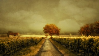 похмуре небо, поле, виноградник, сарай, дерево