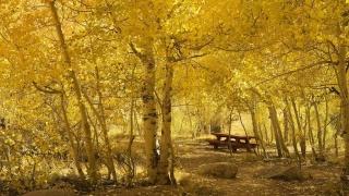 příroda, dovolená, podzim, krásně, stromy, kameny, žluté pozadí