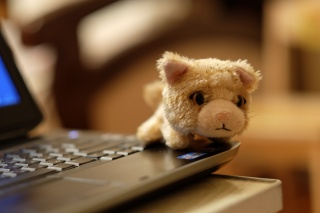 macro, bokeh, blur, toy, kitten, keyboard, laptop