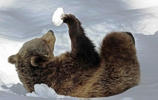 Медвежонок, снег