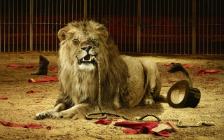 animals, lion, cat, creative