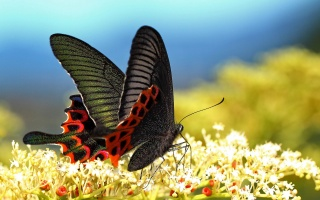 butterfly, flowers, wings, summer