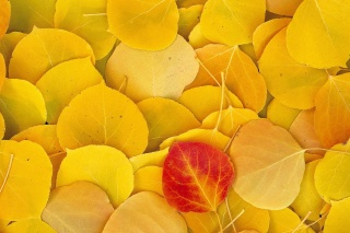 nature, photo, texture, leaves, autumn, yellow background