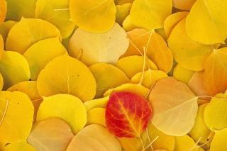 příroda, foto, textura, listy, podzim, žluté pozadí