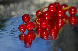 Красная смородина, порички, ягоды, веточка, вода