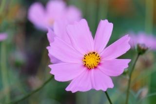 цветок, природная красота, макро