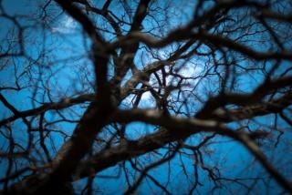 nebe, světlo, větvičky, hloubka, pavučina, jaro, tapety, hloubka, strom, sky, strom, pobočky, web, na jaře