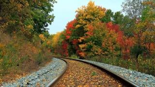 залізничний дорога, ліс, осінь, листя