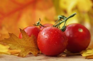 овощи, осень, помидоры