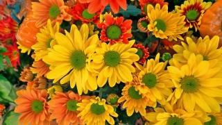 flowers, petals, beauty