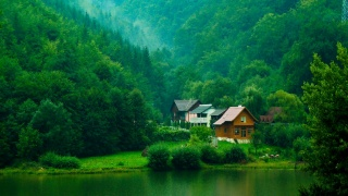 forest, trees, The BUSHES, greens, houses, river