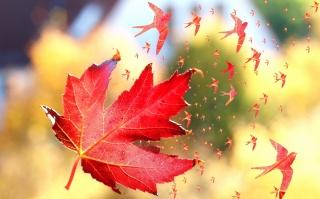 осень, кленовый лист, макро, фєнтези, природа, креатив, ласточки, полёт
