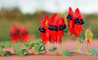 příroda, květiny, makro, foto, téma