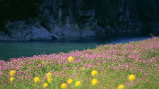 river, water, grass, flowers, field, photo