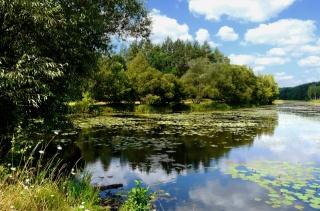 léto, dovolená, rybaření, řeka, příroda, les, krásně, téma, nebe, mraky