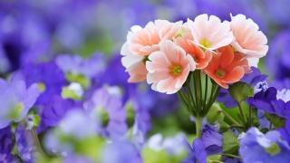 květiny, makro, foto, váš záhonek
