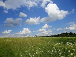 léto, nebe, mraky, tráva, květiny