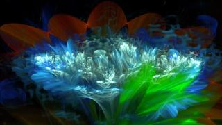 flower, petals, light, leaves, nature, Fantasy