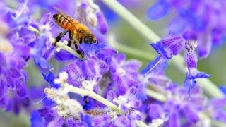 včela, květiny, makro, krása