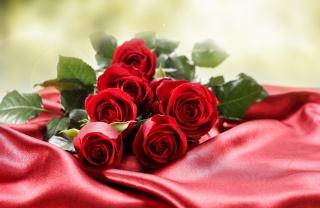 květiny, růže, makro, foto, červené pozadí