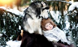 природа, зима, хаскі, дитина, хлопчик, ситуація, позитив
