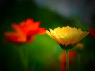 květiny, léto, makro