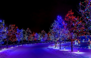 nature, winter, road, trees, lights, New year, beautiful