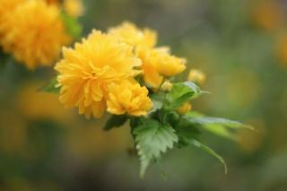 květina, květiny, krása, pozadí, listy