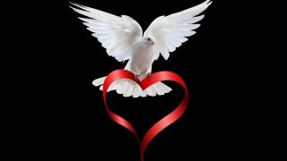 tape, heart, dove
