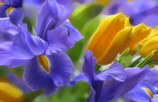 Iris, tulipán, okvětní lístky, světlo, příroda, váš záhonek