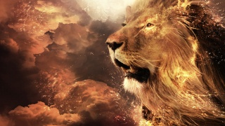 лев, огонь, морда, Дикая кошка