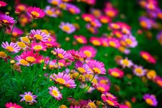 květiny, příroda, makro, foto, téma, léto