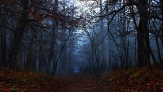 autumn, digital, rays, leaves, graphics, forest, Elegy