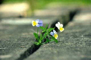 квітка, місто, дорога, макро, фото