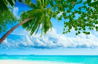 природа, лето, тропики, пальмы, пляж, океан, рай, остров, тема, природа, лето, пальмы, пляж, океан, райский остров, небо, облака