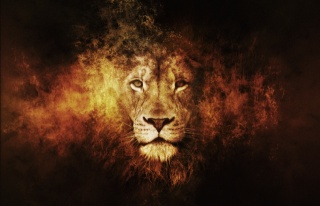 lion, 3d, the dark background, 3D, photoshop