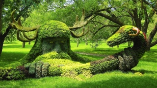 příroda, park, Kanada, Kanada, zelené pozadí, tvůrčí